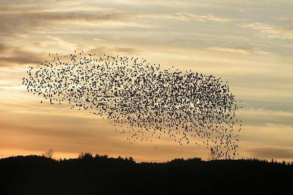 Malanar, la Forja de la Guerra - Página 4 Birds-formation1